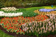Blomman på parkerar Keukenhof Lisse Nederländerna Royaltyfria Foton