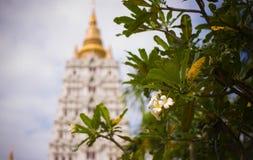Blomman parkerar trädgården royaltyfria foton