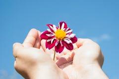 Blomman räcker in Arkivbild