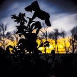 Blomman ser solen p? horisonten royaltyfria bilder