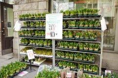 Blomman shoppar pingstliljaväxter Royaltyfri Bild