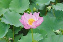 Blomman som värma sig i en sol- lampa Fotografering för Bildbyråer