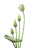 Blomman som värma sig i en sol- lampa Arkivfoton