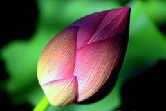 Blomman som värma sig i en sol- lampa Royaltyfri Fotografi