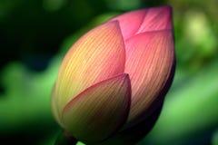 Blomman som värma sig i en sol- lampa Royaltyfria Bilder