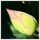 Blomman som värma sig i en sol- lampa Royaltyfri Bild