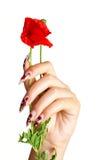 blomman spikar Fotografering för Bildbyråer