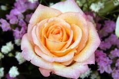 blomman steg Royaltyfria Bilder