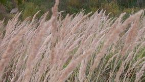 Blomman svänger i vinden under dagen lager videofilmer