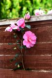 Blomman växer royaltyfria foton