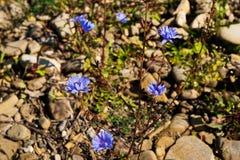Blomman växer till och med stenen Arkivbild