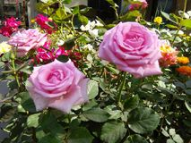 Blommanatur Royaltyfria Bilder