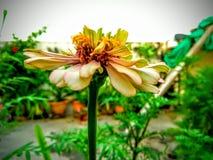 Blommanatur Arkivfoto