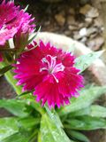 Blommanatur fotografering för bildbyråer