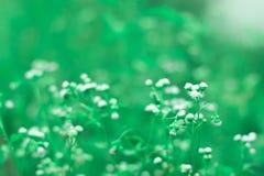 Blommanaturbakgrund Arkivbild