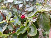 Blommanaturväxt Royaltyfria Foton