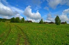 Blommande äng för maskrosvårgräsplan Royaltyfria Foton