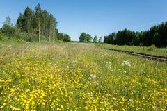Blommande äng på järnvägen Royaltyfri Fotografi