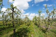 Blommande äpplefruktträdgård i vår 2 Royaltyfri Foto