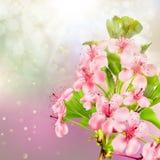 Blommande äppleträd mot himlen 10 eps Arkivfoton