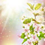Blommande äppleträd mot himlen 10 eps Royaltyfri Fotografi