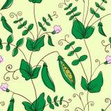 Blommande ärtor vektor illustrationer