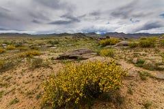 Blommande öken med moln Arizona Förenta staterna, royaltyfria foton