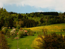 Blommande alpina ängar arkivfoton