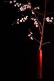 Blommande aprikos i artilleriskalet Arkivbilder