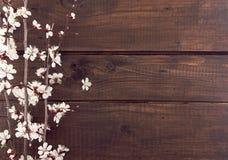 Blommande aprikos på lantlig träbakgrund Arkivbilder