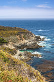 Blommande berglutningar av den Stillahavs- kustlinjen i sommar Tid Bild som tillsammans med tas av huvudvägen nummer 1 Arkivfoton