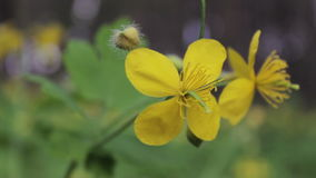 Blommande blomma i solen stock video