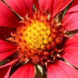 Blommande blomma med sidor som bor den naturliga naturen arkivbilder