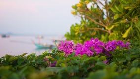 Blommande blomma vid kusten Arkivbild