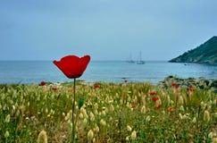 Blommande blommavallmo på kusten av det medelhavs- Fotografering för Bildbyråer