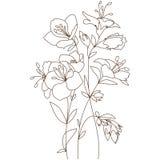 Blommande bukett för vår Arkivfoton