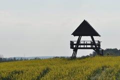 Blommande canola, polskt fält Royaltyfri Foto