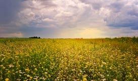 Blommande fält Royaltyfria Foton
