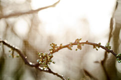 Blommande filial Arkivbilder