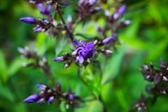 Blommande flox för ` för `-blåttparadis i trädgården Royaltyfri Bild
