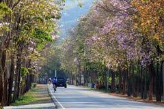 Blommande gata Royaltyfria Bilder