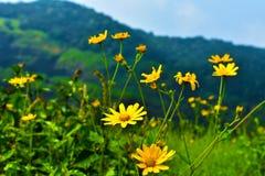 Blommande glwer arkivfoton
