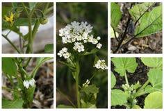 Blommande grönsakträdgård Fotografering för Bildbyråer