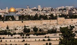Blommande gul senapsgult biblisk buske på den Mount of Olives oven arkivfoton