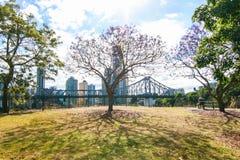 Blommande jakaranda i Brisbane Australien Arkivbild