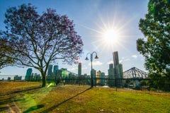 Blommande jakaranda i Brisbane Australien Arkivbilder