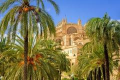 Blommande körsbärsrött träd i domkyrkaträdgården, Palma de Mallorca, Royaltyfria Foton