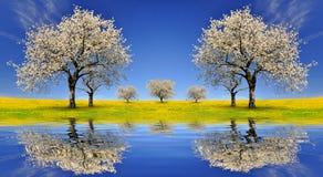 Blommande körsbärsröda träd Royaltyfri Bild