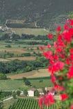Blommande landskap för grön dal med berg i italienare Abruzzo Arkivbilder