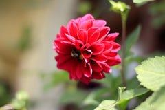 Blommande liv Royaltyfria Bilder